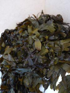 Seaweed from Strandhill, County Sligo