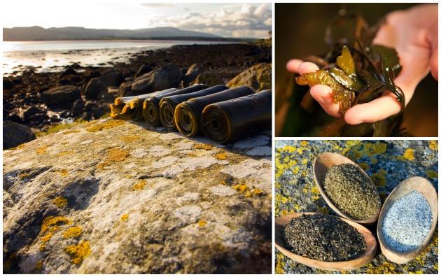 Seaweed in County Sligo